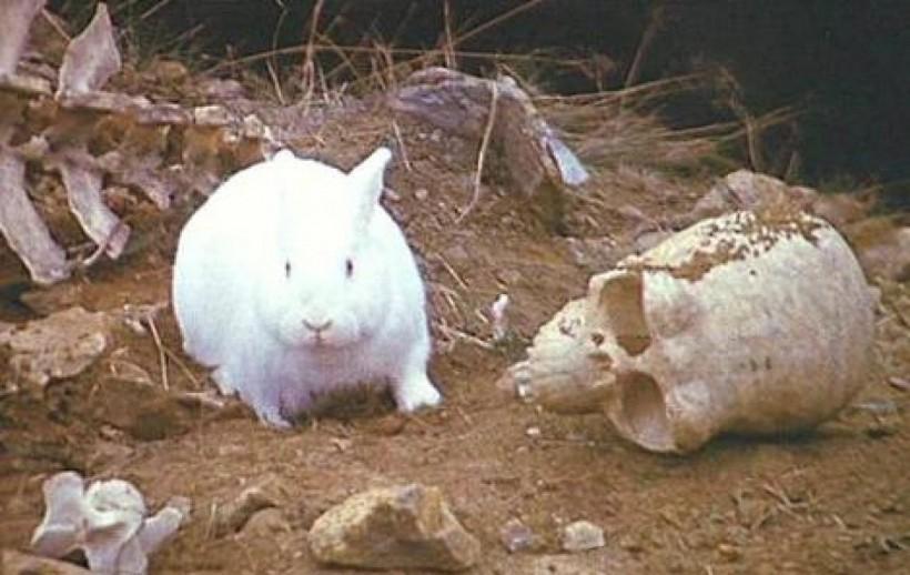 bunnykillerrabbit040612